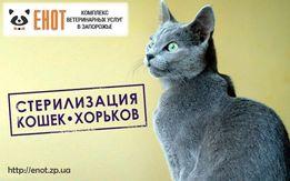 Стерилизация (кастрация) кошек и фреток(хорьков), овариогистероэктоми