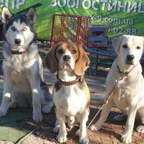 Кинолог. Дрессировка собак от Школы для собак К9 Днепр