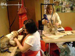 Kurs strzyżenia psów Kurs groomerski groomingu PROMOCJA 2500 zł