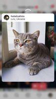 55 грн доба Готель для тварин перетримка тварин передержка отель