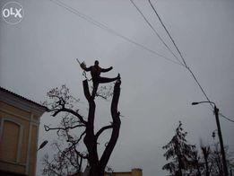 Спил деревьев любой сложности,обрезка веток,порезка дров.