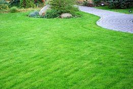 Семена газонной травы для Вашего сада ЛУЧШАЯ ЦЕНА