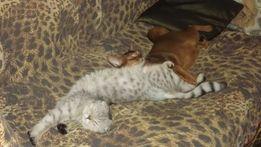 Домашняя зоогостиница для собак и кошек, лучшие условия!