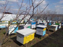 Пасика с пчелами