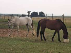 6 x Mares Horses available. Price is per horse or all 6 for R75k