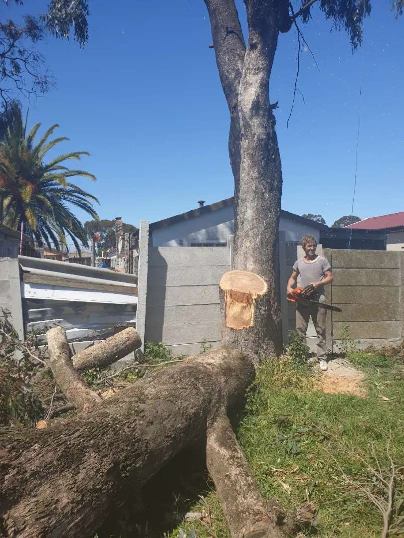 CAPE - TREE FELLERS, REFUSE REMOVAL, PRUNING,  PLOT CLEARING ALL AREAS 0