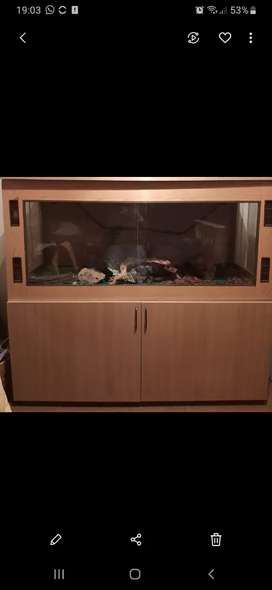 Reptile cage and cupboard for sale