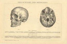 Piękne XIX w. oryginalne grafiki MEDYCZNE - CZASZKA do wystroju