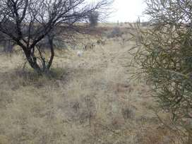 3+ hectares land