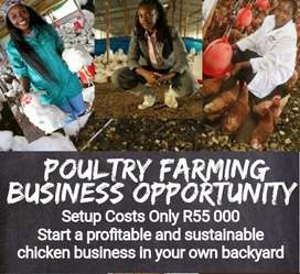 Chicken production business opportunity