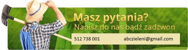 Tuja 'Szmaragd' 100 cm. w SUPER CENIE!!! Budzyń - image 7