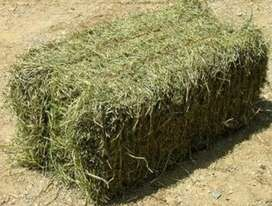 Hay lusern bales for sale
