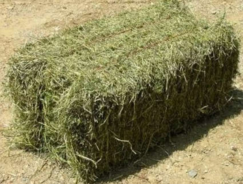 Hay lusern bales for sale 0