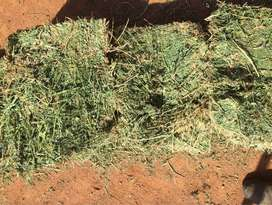 Lucerne hay for sale