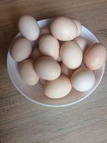 Jajka,jaja swojskie ,wiejskie.