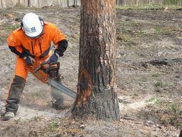 Валка Деревьев, Цены доступные всем.