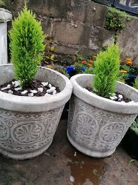 Plants and Pots for sale Durban Chatsworth