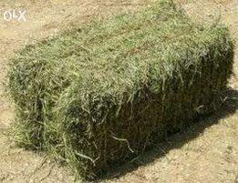 продам сено тюкованное ,луговое , люцерна этого года.