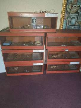 Second hand reptile cages etc