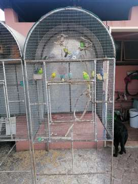 Bird Cage / Budgies Open for Reasonable Offers