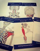 Fiszki anatomiczne - idealny prezent dla fizjoterapeuty
