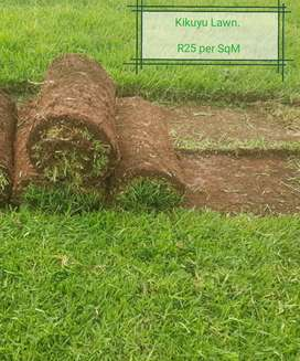 Instant Lawn and Plants