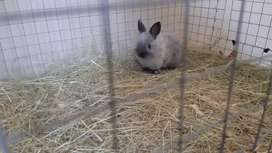 Nevertheless dwarf  rabbit cute little fellow