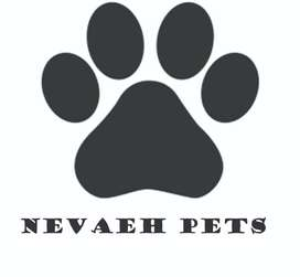Pet furniture and Accessories