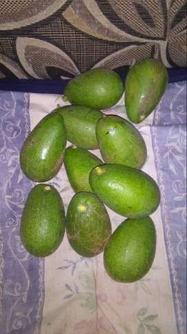 Avos delivered right to your door