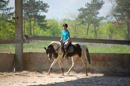 Продам лошадь,мерин, конь