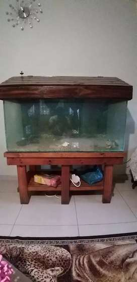 Fish Tank with amenities
