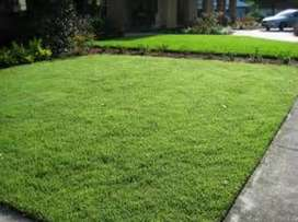 We deliver and install roll-on lawn fresh from the farm.