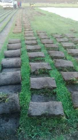 We deliver and install all types of grass