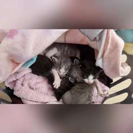 Looking for 2 kittens