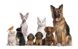 СТЕРИЛИЗАЦИЯ, КАСТРАЦИЯ кошек и собак с выездом на дом.