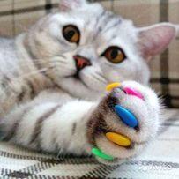 Антицарапки для котов и кошек