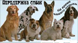 Передержка собак в Донецке и обл.