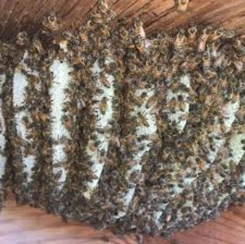 Beehive removal