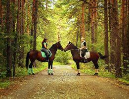 Уроки верховой езды. Прокат лошадей