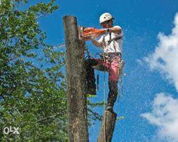 Спил деревьев,корчевание,удаление ствола по частям