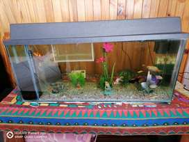 120 and 60 liter tank and fish