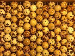 Инкубационные перепелиные яйца Техасский бройлерный ,