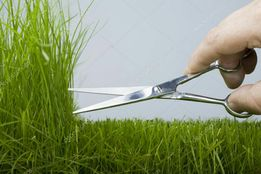 Покос травы, уборка територий,культивация,перекопка земли мотоблоком