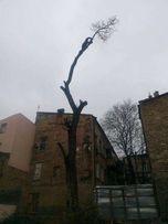 Альпинисты , услуги по обрезке деревьев в Одессе,спилить дерево цена