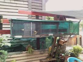 Budgies with cage for sale