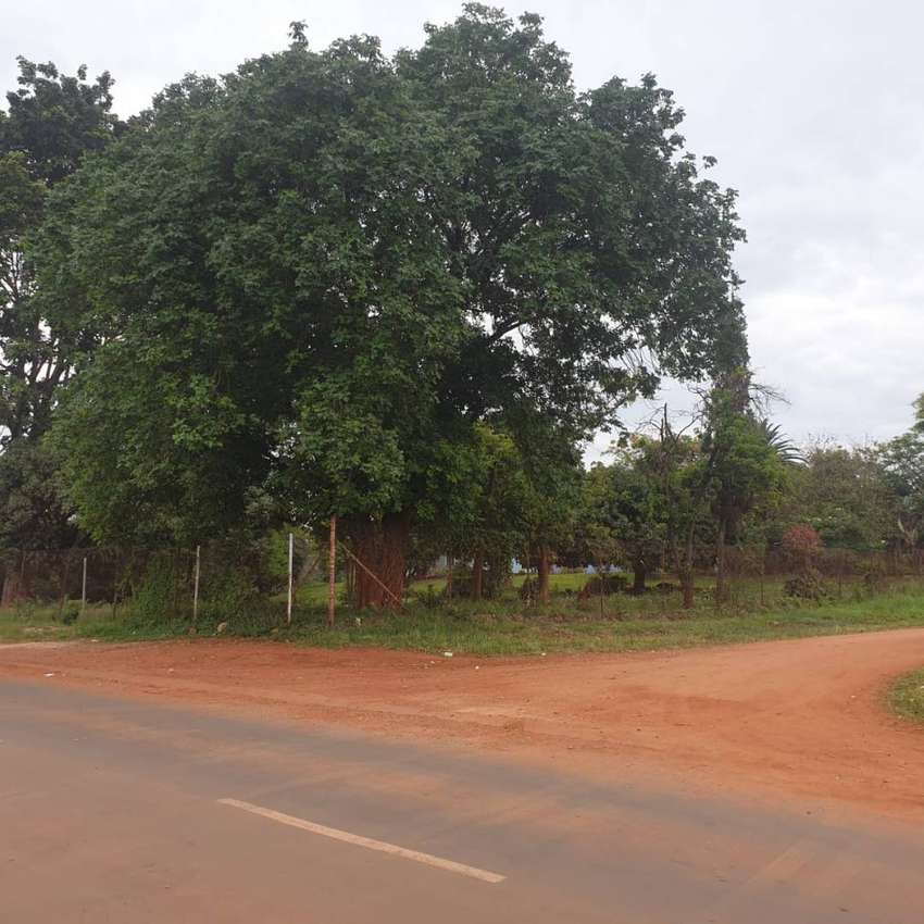 White Area Sibasa   1300sqm  Stand close to the Tarred Road .
