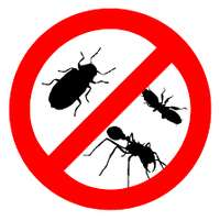 Image of Pest control services