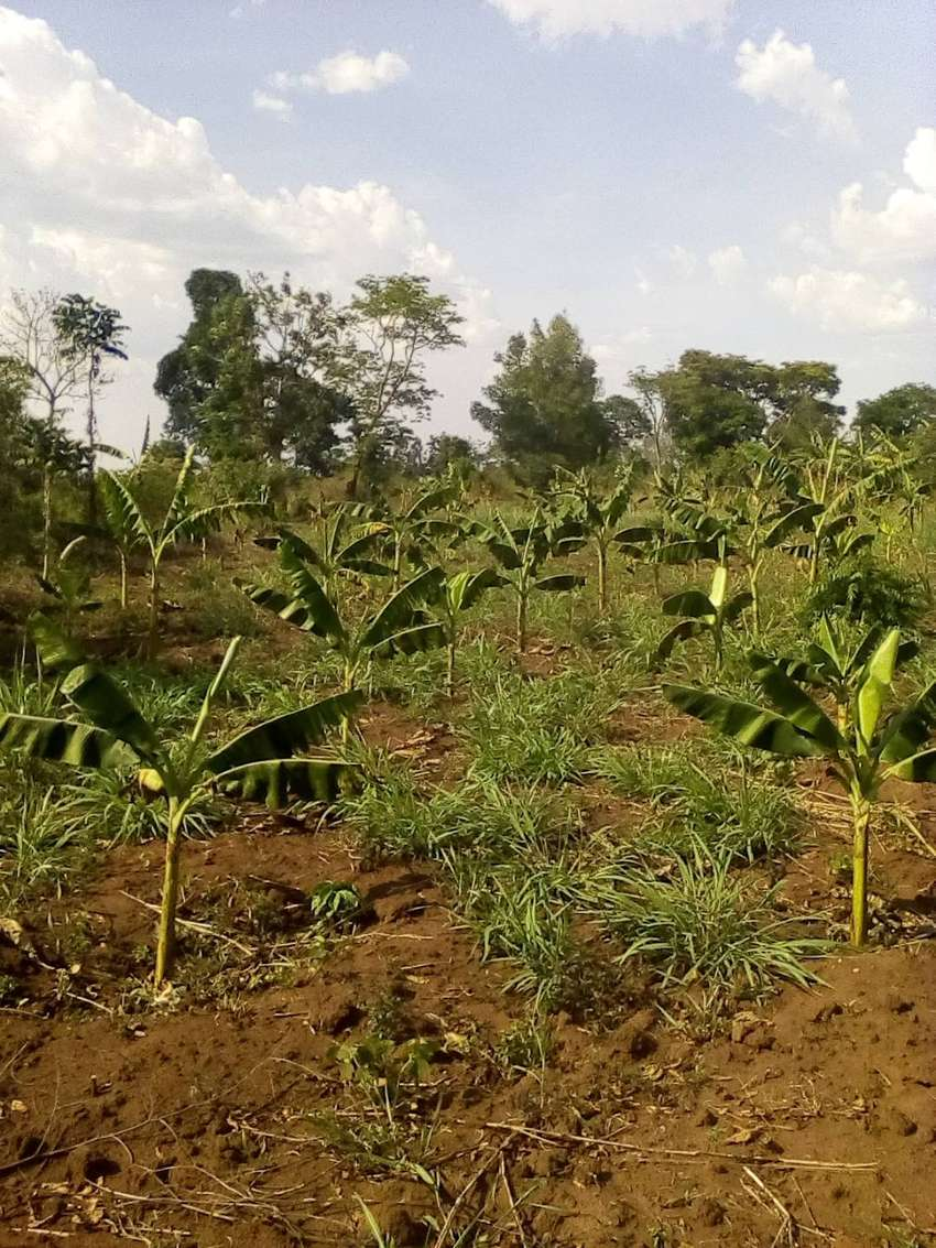 2 hectares for sale located in kapeka 0