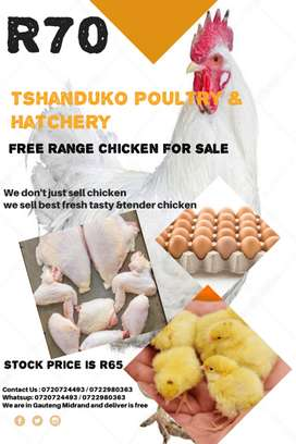 Chicken for sale and eggs