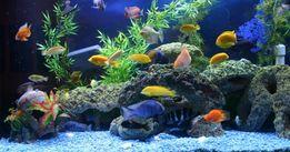 Чистка аквариумов Донецк и Макиевка